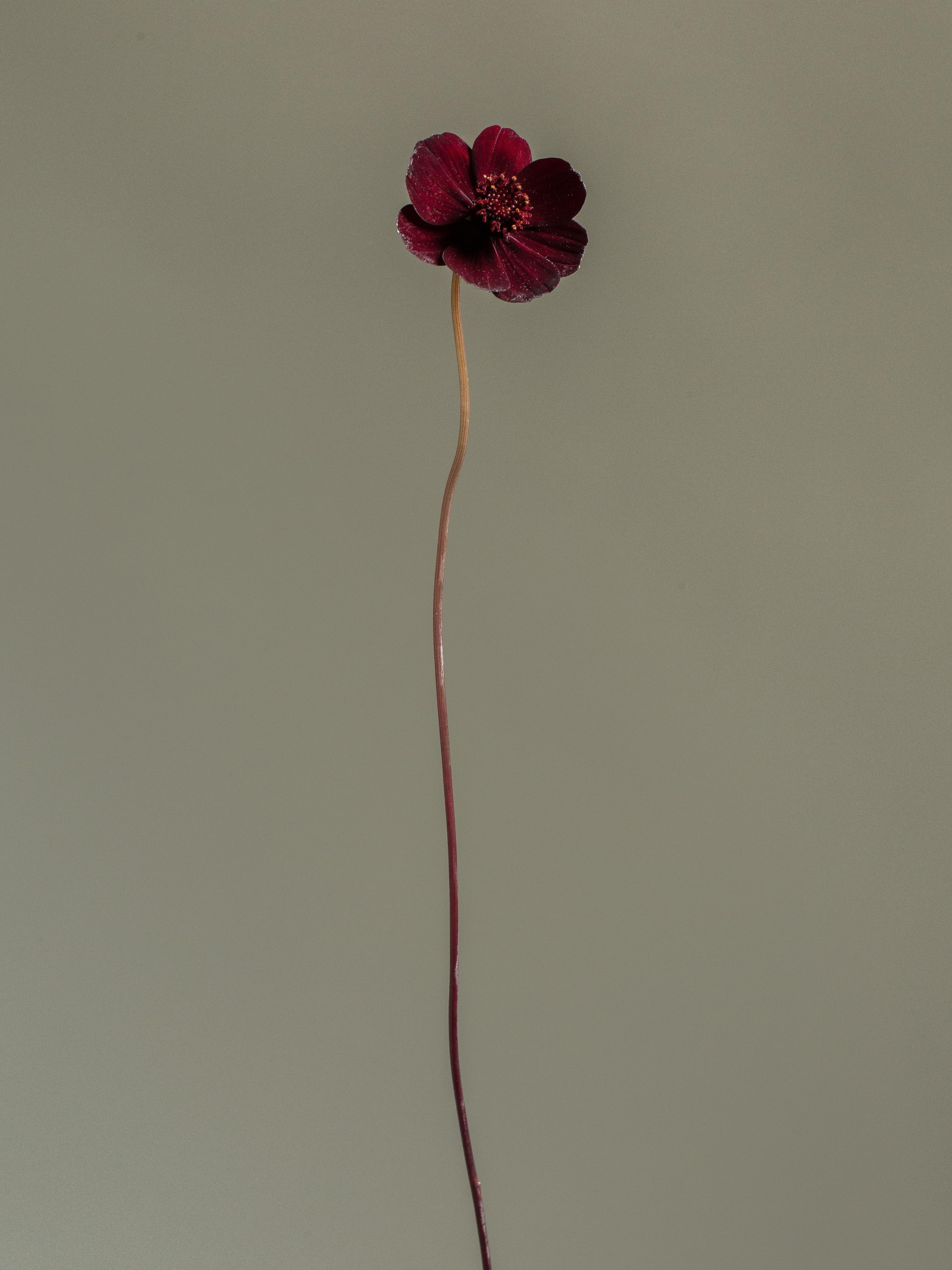 Milou_Floral_los_1